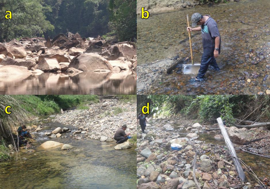 a) Tembat River, b) Petuang River, c) Buluh Nipis River, d) Mandak River